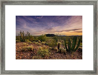 Organ Pipe Cactus Sunset  Framed Print by Saija  Lehtonen