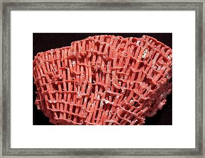 Organ Pipe Coral Framed Print by Dirk Wiersma