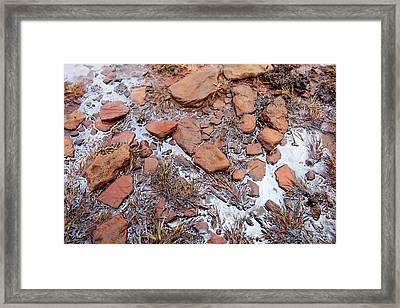 Organic Algal Bloom On A Bog Framed Print by Ashley Cooper