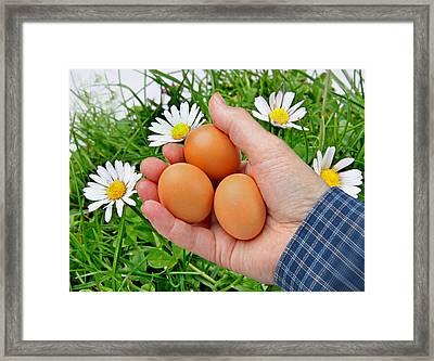 Organic Egg Framed Print by Manfred Lutzius
