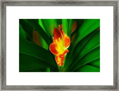 Organic Glowing Framed Print by Daniel Daniel