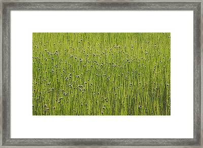 Organic Green Grass Backround Framed Print