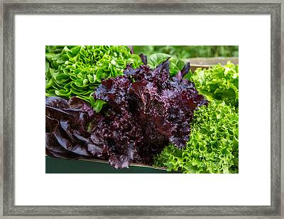Organic Lettuce Box Framed Print by Iris Richardson