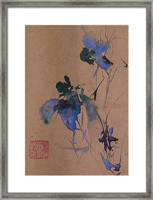 Oriental Blue Louisiana Iris Flower Study  Framed Print by Robin Miller-Bookhout