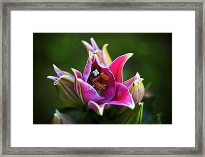 Framed Print featuring the photograph Oriental Day Lily by Ben Shields