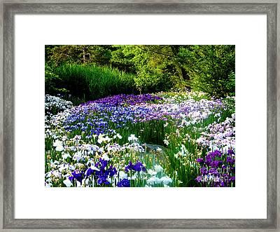 Japanese Iris Botanical Garden Wall Art Framed Print