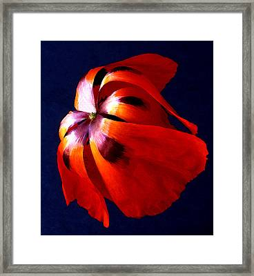 Oriental Poppy I Framed Print