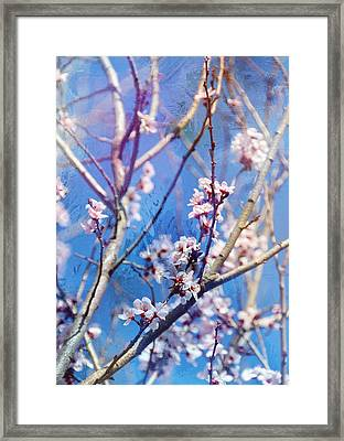 Oriental Spring Cherry Blossoms Framed Print