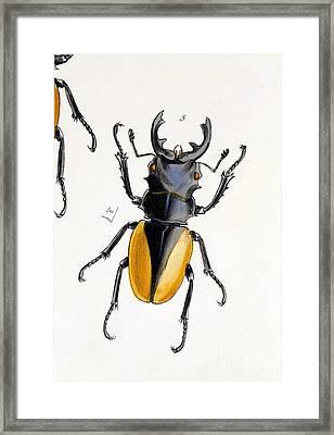 Oriental Stag Beetle, 19th Century Framed Print