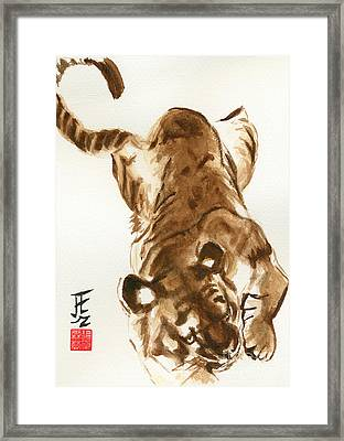Oriental Tiger Framed Print by Sandy Linden