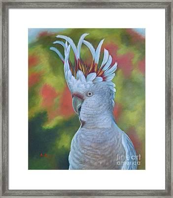 Original Animal Oil Painting Art -parrot #16-2-5-17 Framed Print
