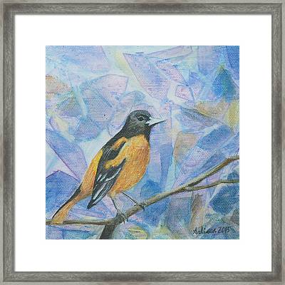 Oriole - Birds In The Wild Framed Print by Arlissa Vaughn