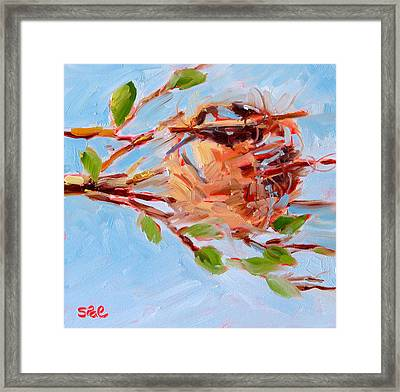 Oriole Nest Framed Print by Suzy Pal Powell