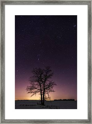 Orion Tree Framed Print