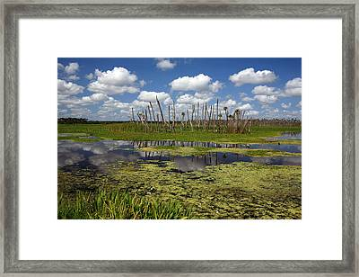 Orlando Wetlands Cloudscape 2 Framed Print by Mike Reid