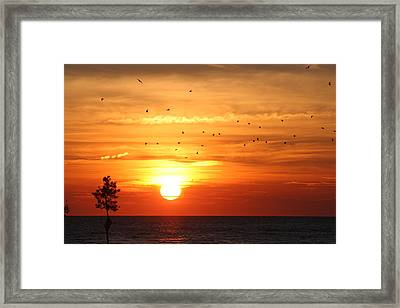 Orleans Sunset Framed Print