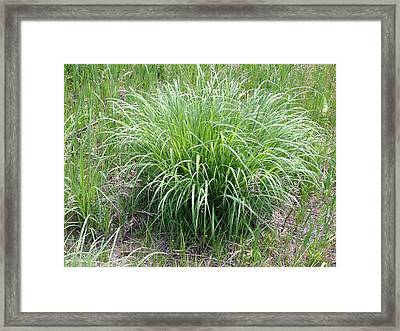 Ornament In The Wild Framed Print by Ron Torborg