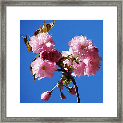 Ornamental Crab Framed Print by Will Boutin Photos