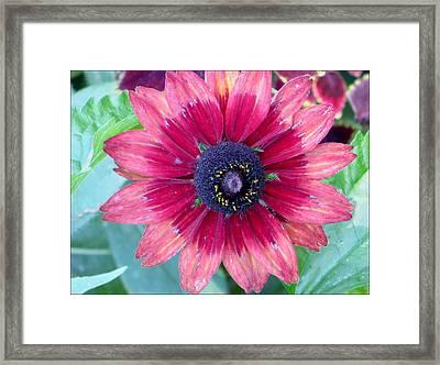 Ornamental Daisy Framed Print by Sonali Gangane