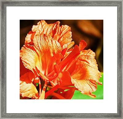Ornamental Ginger Framed Print by Margaret Saheed