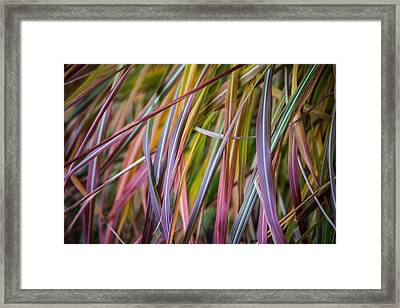 Ornamental Grass Framed Print