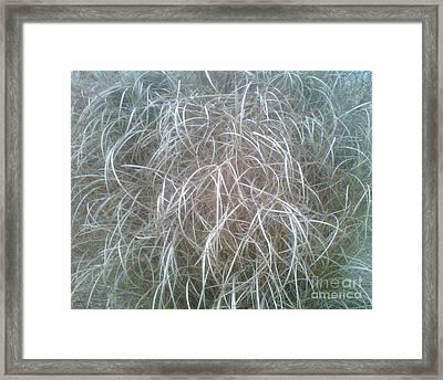 Ornamental Grasses 1 Framed Print