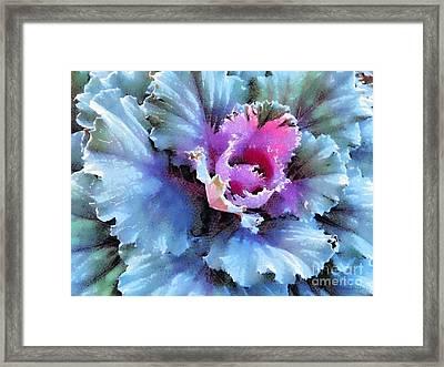 Ornamental Kale -blue Green Framed Print by Janine Riley