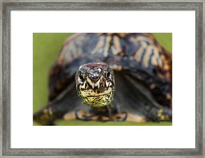 Box Turtle Close-up Framed Print by Mechala  Matthews