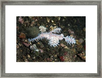 Ornate Ghost Pipefish Framed Print by Andrew J. Martinez