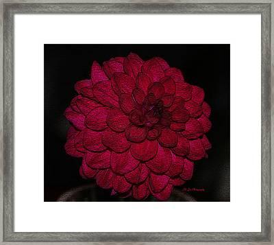 Ornate Red Dahlia Framed Print