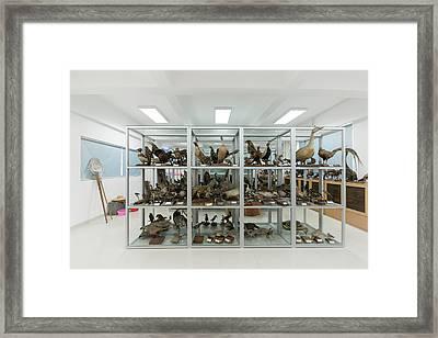 Ornithological Specimens Framed Print by Pan Xunbin