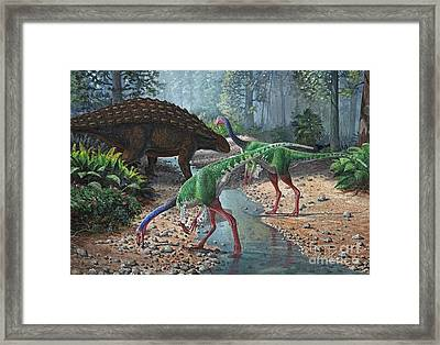 Ornithomimus Swallowing Stones Framed Print