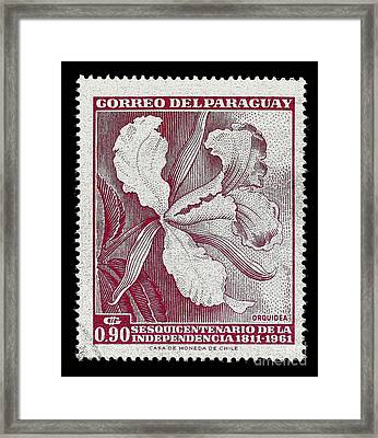 Orquidea Framed Print by Andy Prendy