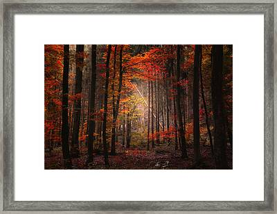 Orton Forest Framed Print by Philippe Sainte-Laudy