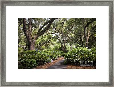 Orton Plantation Scenic Walkway Brusnwick County Nc Framed Print