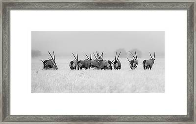 Oryx In The Rain Framed Print