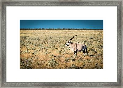 Oryx Profile - Color Oryx Photograph Framed Print by Duane Miller