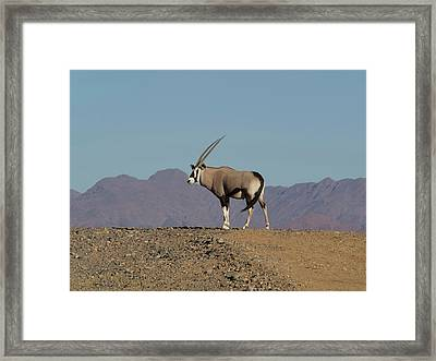 Oryx Standing On A Hill, Namib-naukluft Framed Print by Panoramic Images