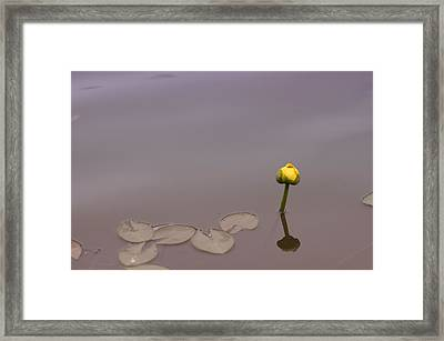 Framed Print featuring the photograph Osaka Garden Tranquility by Miguel Winterpacht