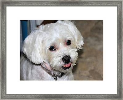 Oscar Framed Print by Rosalie Scanlon