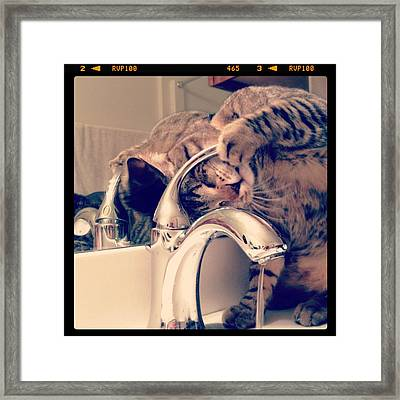Oskar At The Faucet Framed Print by Mick Szydlowski