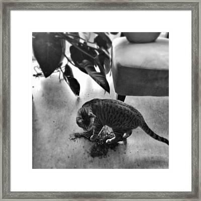 Oskar In Trouble Framed Print by Mick Szydlowski