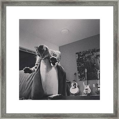 Oskar Super Cat Framed Print by Mick Szydlowski
