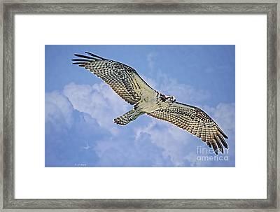 Osprey 91711 Framed Print by Deborah Benoit