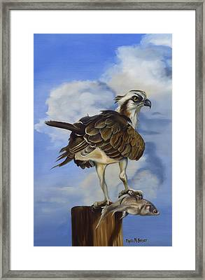 Osprey And A Mullet Framed Print by Phyllis Beiser