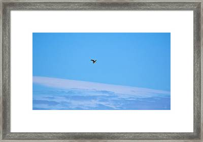 Osprey And A Pike High Over The Clouds Framed Print