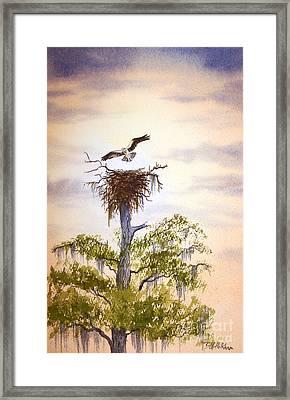 Osprey Approaching Nest Framed Print
