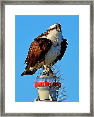 Osprey Close-up On Water Navigation Aid Framed Print by Jeff at JSJ Photography