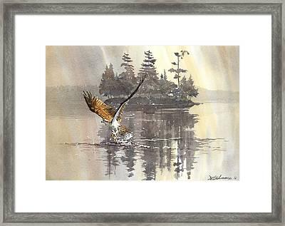 Osprey Hunting No.2 Framed Print by David Gilmore