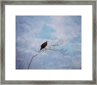 Osprey On Tree Branch Framed Print